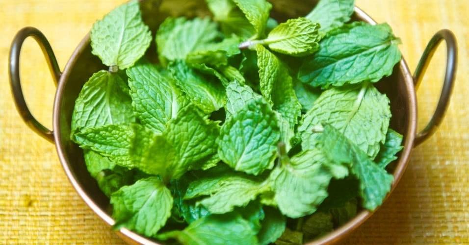 Chá De Hortelã Veja Benefícios