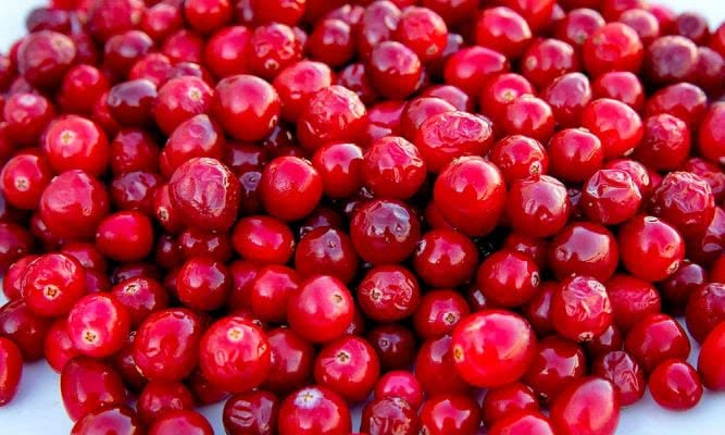 O Que E Cranberry Tricurioso X